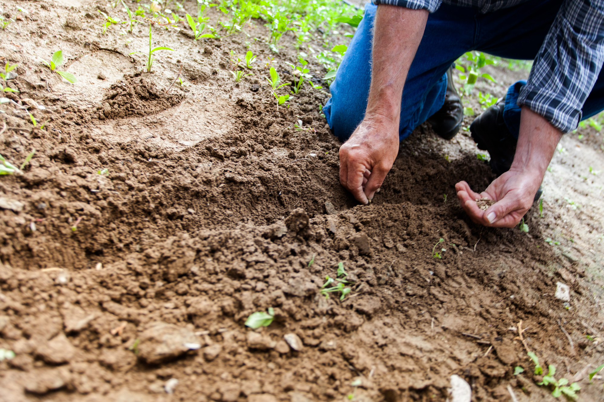 What You Need to Know: Enjoy Gardening Without Injuring Your Spine ...